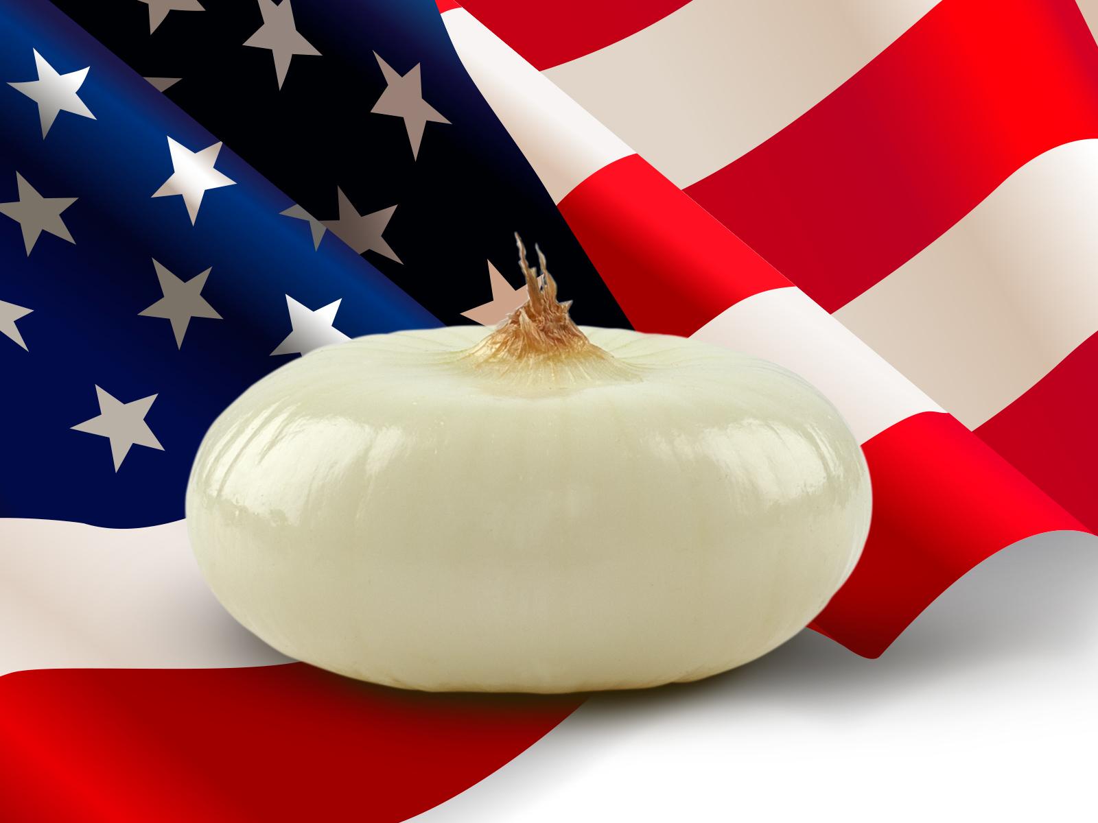 Cipollina Borettana negli Stati Uniti