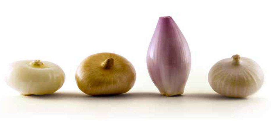 Cipolle Freddi